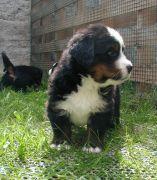 B-pups18-crop